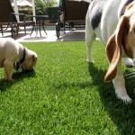 Chula Vista Pet Turf, San Diego Synthetic Pet Turf