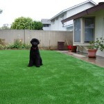 Pet Turf for Dogs San Diego, Chula Vista Artificial Grass for Pets