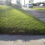 Artificial Grass Companies In Chula Vista, Artificial Grass Contractors San Diego,